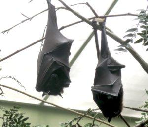 Bats at the National Aviary in Pittsburgh © 2016 Karen Rubin/goingplacesfarandnear.com