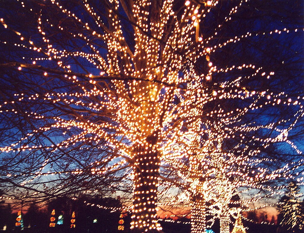 Spectacular lighting displays at Longwood Gardens, in the Brandywine Region © 2016 Karen Rubin/goingplacesfarandnear.com