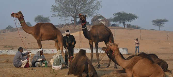 Day into Night at the Pushkar Camel Fair & Festival of Brahma, India