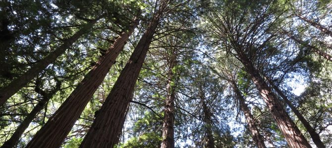 Muir Woods is San Francisco's Cathedral to Mother Nature